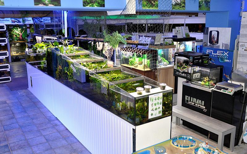 Süßwasserabteilung grosse Pflanzenanlage mit Aquarien im Hintergrund