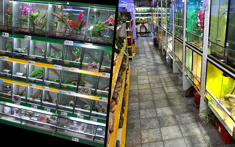 Terraristikabteilung zweigeteiltes Bild mit Arachniden und Gang durch die Abteilung