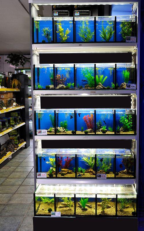 Süßwasseraquaristik Kampffischanlage mit Aquarien 5 x 5