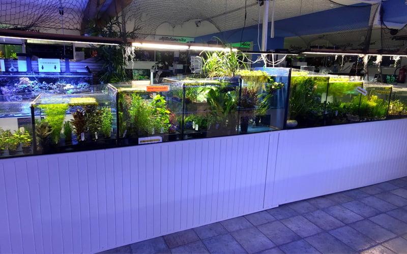 Süßwasserabteilung Pflanzenanlage