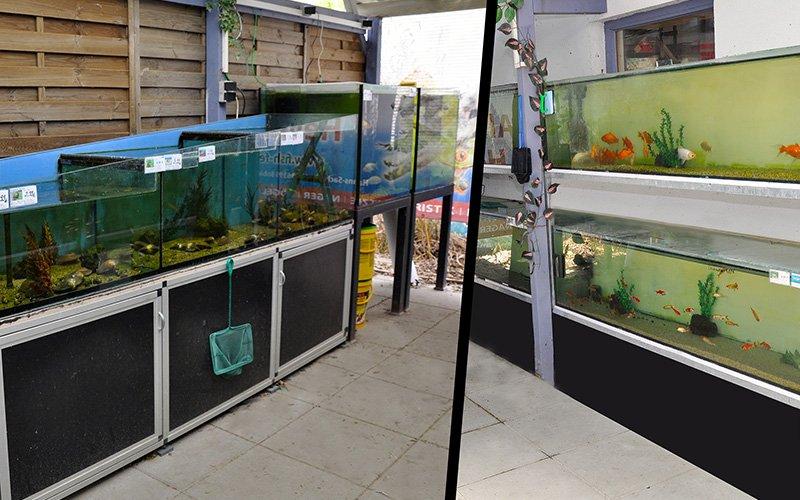 Fish Fever Außenanlagen mit Aquarien